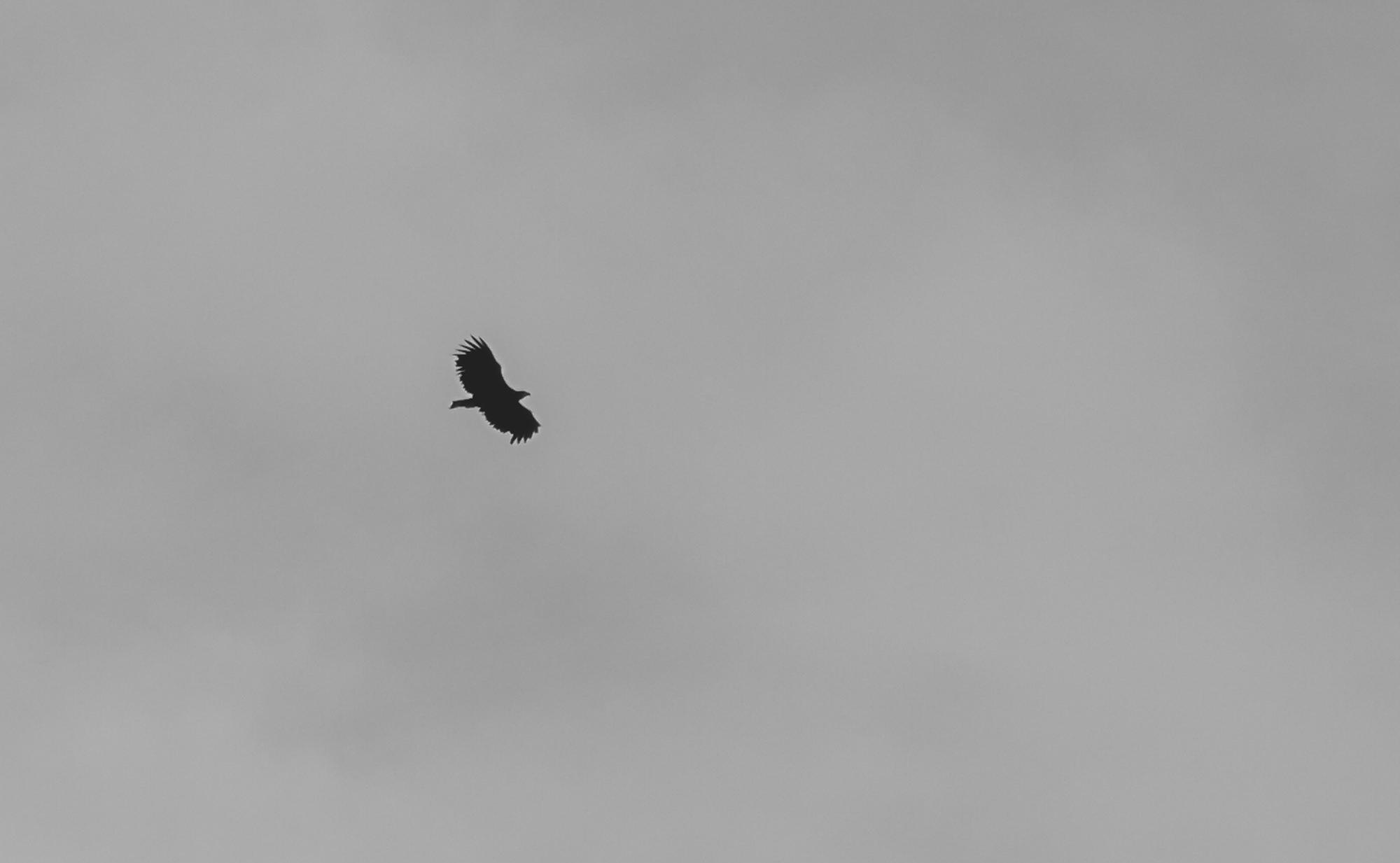 sea eagle lototen