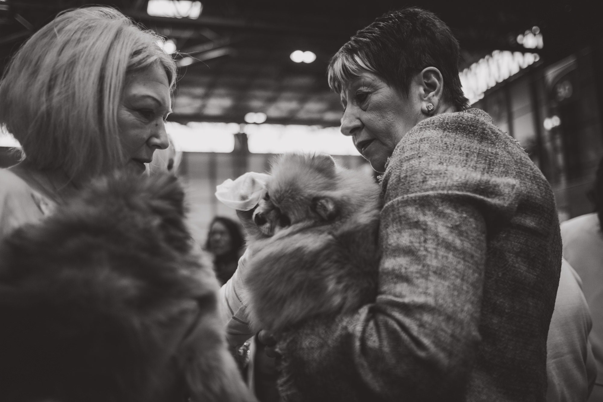 Crufts Photography